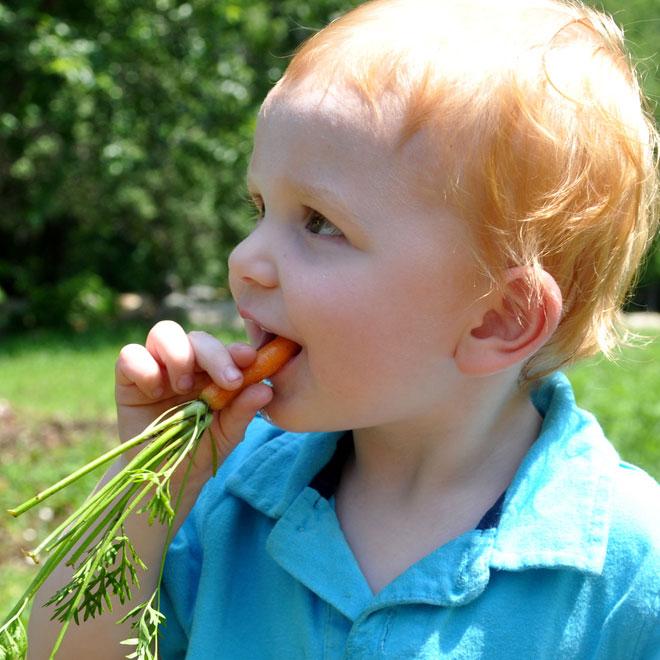 De ce trebuie sa le dam copiilor morcovi